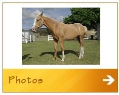 Mega-Horse-Button-5